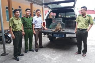 Tiếp nhận động vật hoang dã để cứu hộ, chăm sóc và thả về môi trường tự nhiên